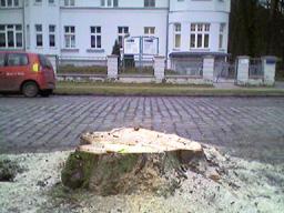 ewe-biesenthal.jpg