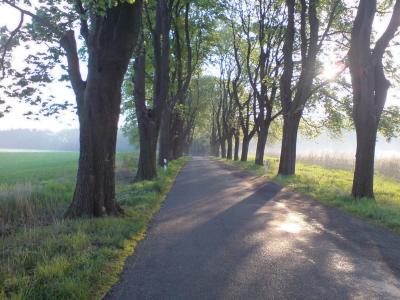Allee Rüdnitz-Danewitz-L29 am Morgen
