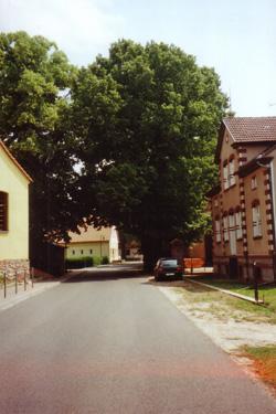tuchen-2006.jpg