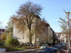 Die Rosskastanie in der Walther-Rathenau-Straße im Herbst 2008