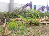 Eine zwei Fußballfelder große Fläche auf dem Gelände des Eberswalder THIMM-Verpackungswerkes wurde zur Hauptbrutzeit der Singvögel im Mai 2012 entwaldet. Zahlreiche Gelege wie von der Nachtigall sind damit zerstört worden. Eine vom Zeitmanagement des Unternehmens völlig überflüssige Tat.