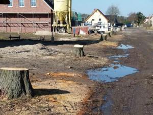 Schönow: Wieder eine Allee zerstört